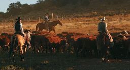 cowboys pushing cattle on O RO ranch