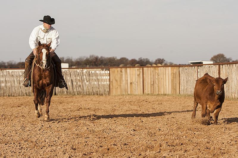 Calf and horse coming towards camera