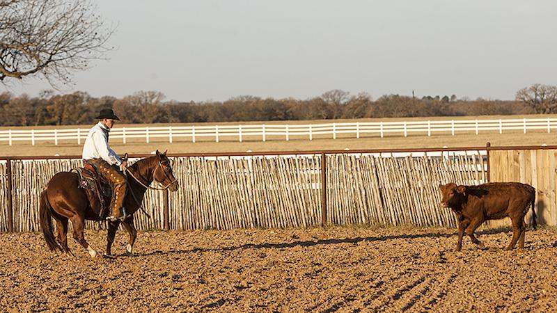 Kory Pounds working a cow horseback