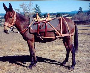 Difani's Backcountry