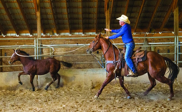 "Bill Myers starts all the weanlings in a round pen by getting them used to moving their feet. Myers horses are started as 2-year-olds, and according to barrel racer Kristi Peterson, one started by Bill is highly sought-after. ""There are some people just born with a gift for horses, and he has it,"" she says. ""I tell people going up to their sale to get one that is 'Bill broke' because you can't go wrong."""