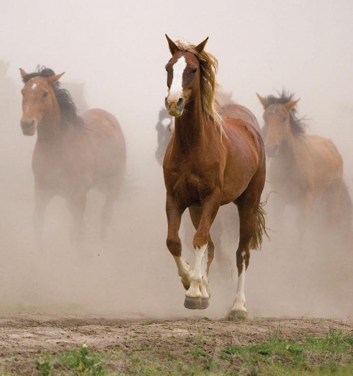 horses running through sand