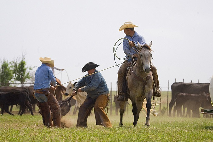 Working on Oklahoma's Hall Ranch, KJ Kasun drags a calf to the fire while the ground flanks it.