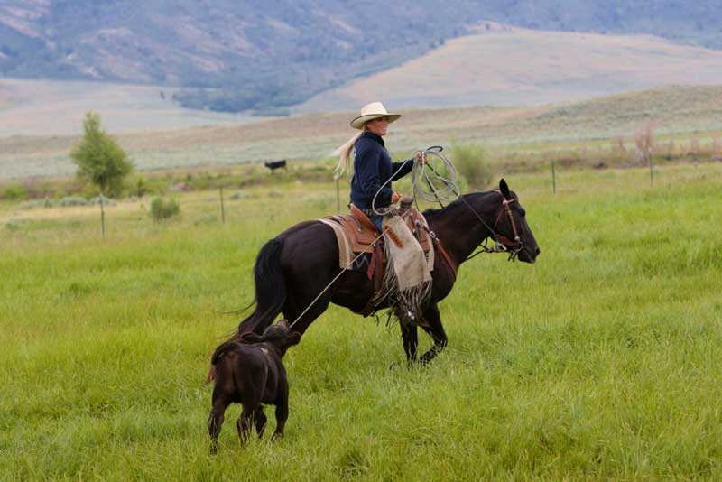 Performer Trinity Seely sets up a calf to be heeled at the TA Ranch branding.