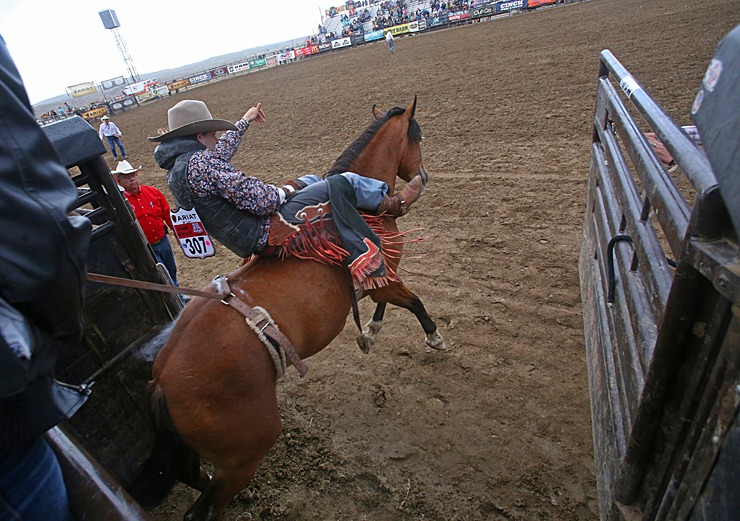 bareback coming out of the chutes