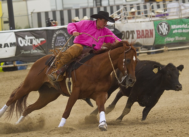 reined cow horse