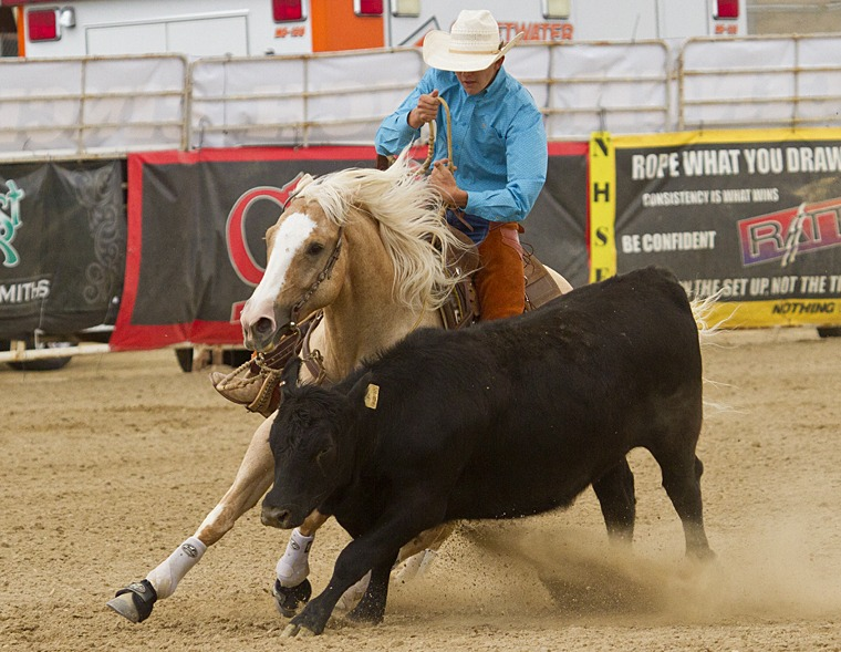 reined cow horse tracking cow