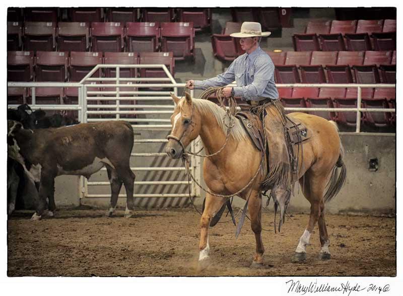 palomino horse in arena