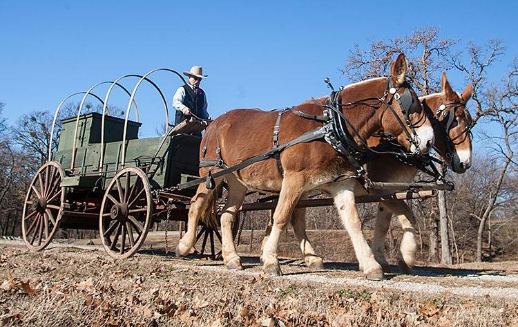 No Ordinary Sale - Western Horseman