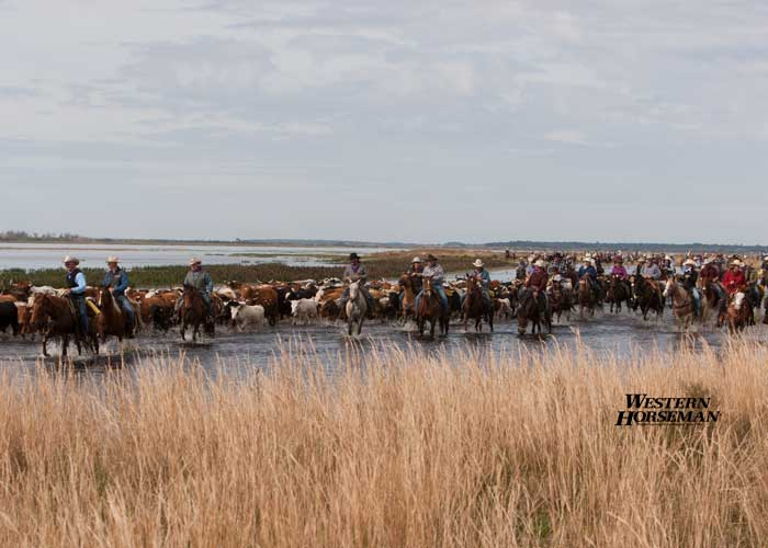 ch FL Cattle Drive 16 IMG 8121