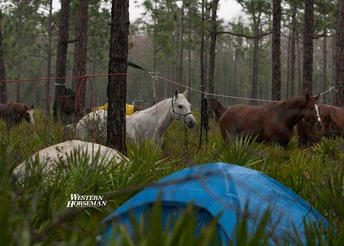 ch FL Cattle Drive 16 IMG 8343