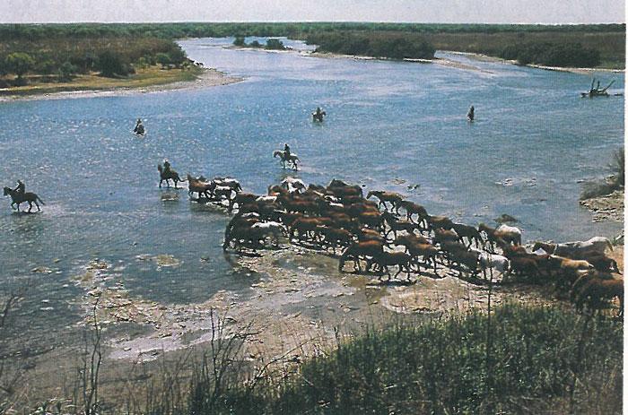 Remuda in the river