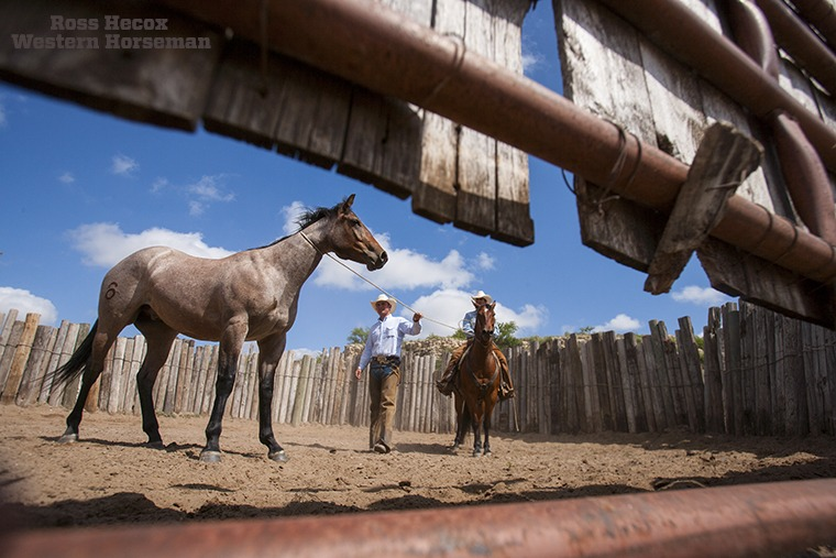 Have I mentioned that I love wide-angle lenses? I was on the Hitch Ranch in Oklahoma nine years ago, and cool photo scenes were unfolding everywhere. Here, Buster Holland eases up to a young bronc while Todd Adams holds it steady. The crew rode several green colts in the bronc pen that morning while I lay on the ground and pointed my lens underneath the gate. The article on the Hitch Ranch ran in the April 2008 issue.