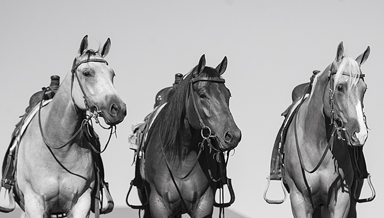 three horses in a row each of a different color