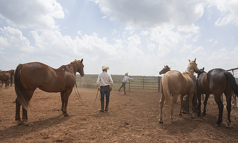 Boots O'Neal watches Monte Hollar rope a horse out of the remuda.