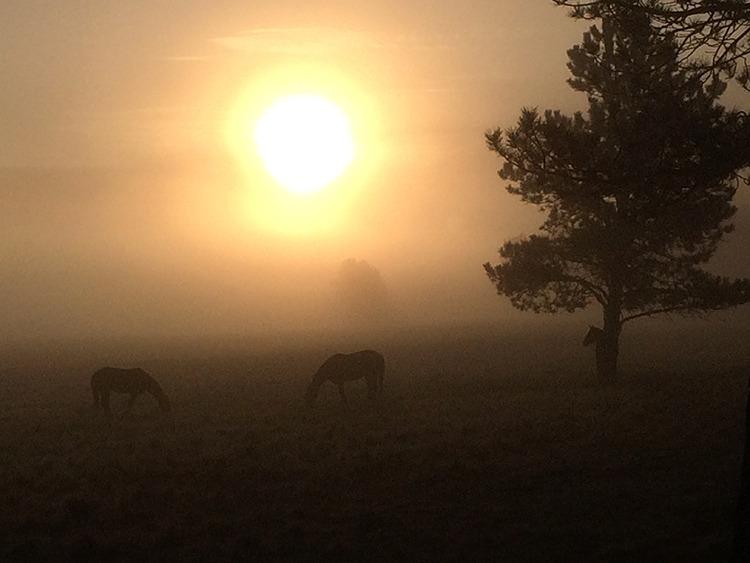 CAA horses graze at sunrise near camp.