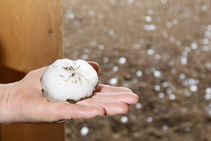 In less than 15 minutes the ground was covered with palm-sized hail.