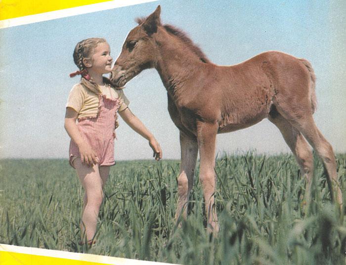 November 1949 Horse Quiz Western Horseman