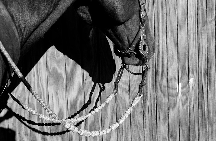 My father-in-law Bryan Neubert braided these reins for us as a wedding gift.