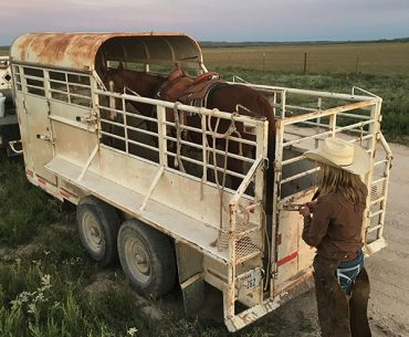 You're not a true ranch horse until you've travelled in a half-top trailer.