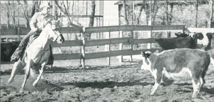Hollywood Jac 86 working a cow