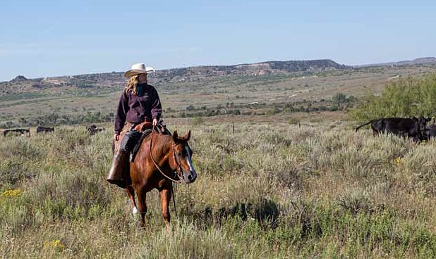 Spade Ranch kf 263
