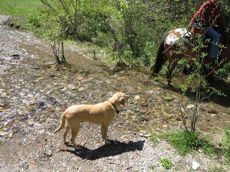 horsethroughwater