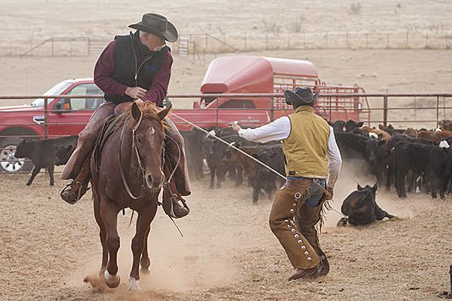 Dragging calf to fire