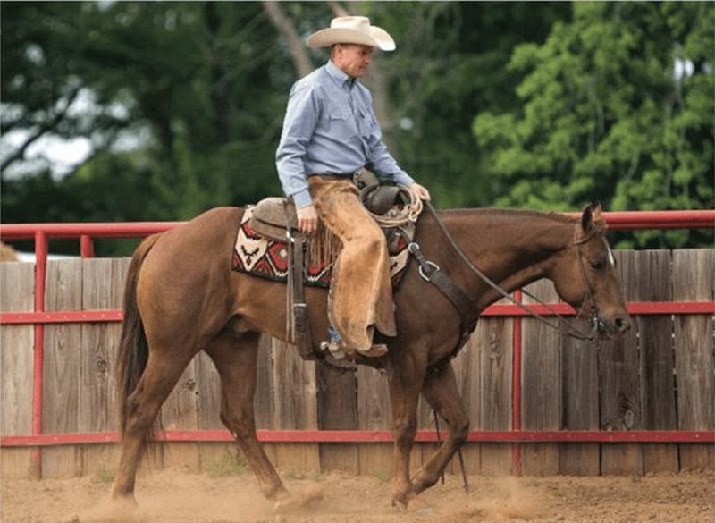 Mozaun walking a horse