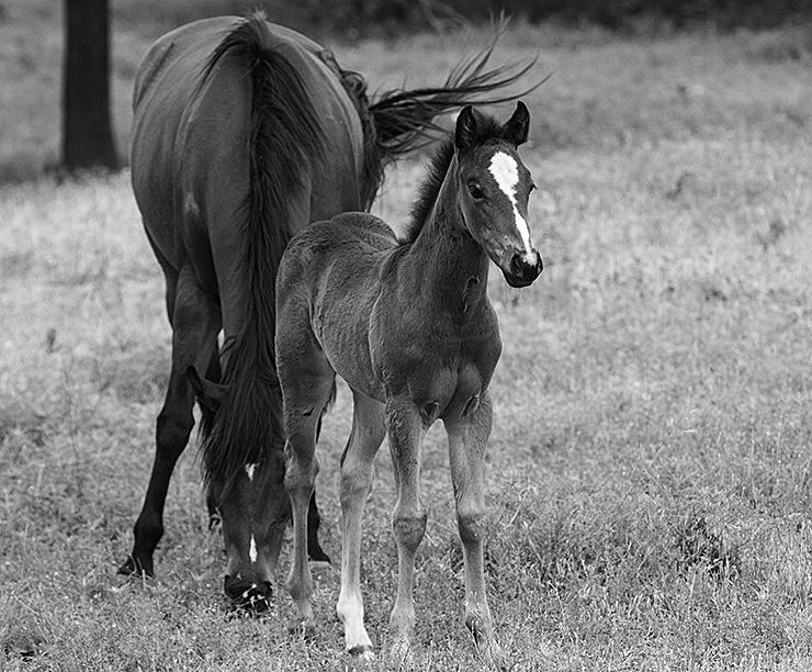 170521 hecox foals 05