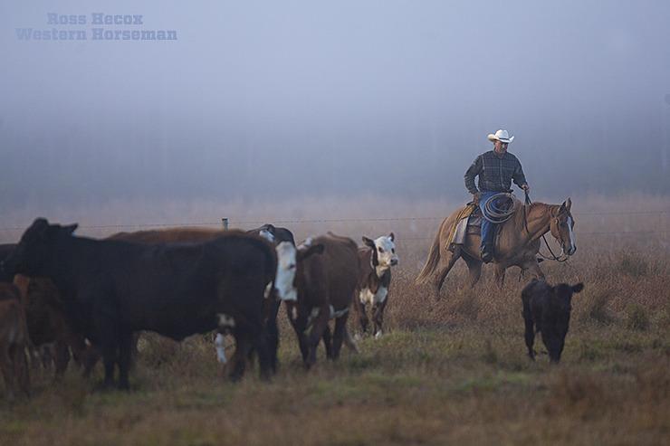 Misty Morning Gathers Western Horseman