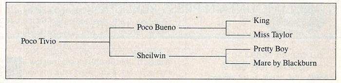 PocoTivio pedigree