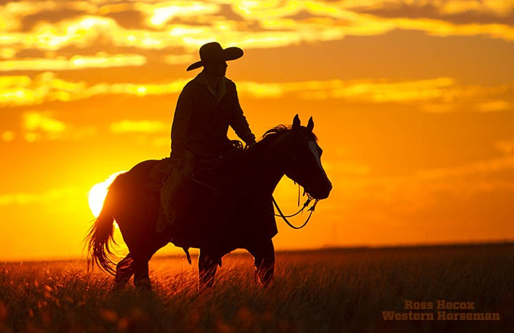 Toby Winters trots across a pasture at sundown on the Hitch Ranch in the Oklahoma Panhandle. He and the cowboy crew were moving yearling calves to a new pasture.