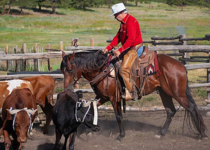 Larry Mahan on horse walking through steers