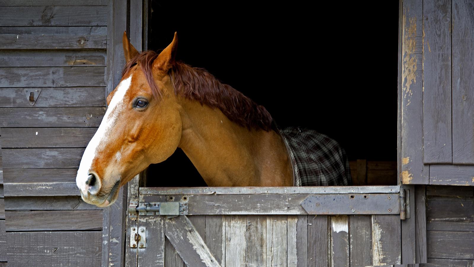sweet pdz horse stall