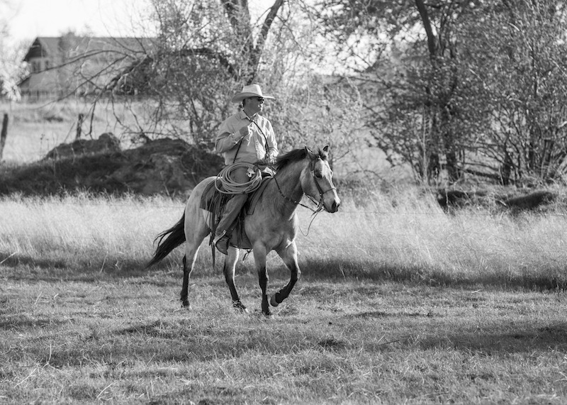 cowboy riding gelding across field