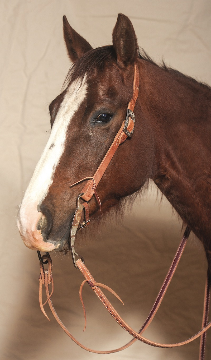 horse with cowpuncher headstall and a curb bit