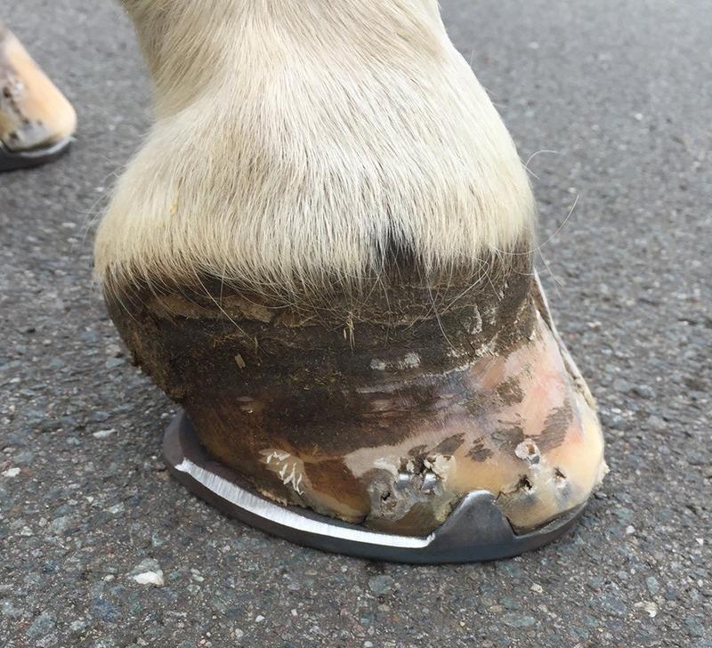 sole bruising
