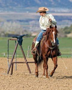 Show horse pulling a roping sled.