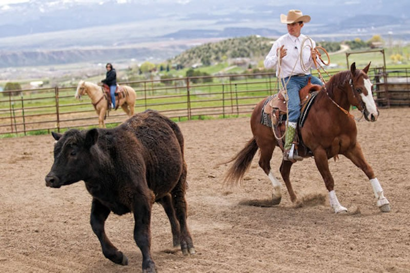 Aaron Ralston works with his horse on cattle.