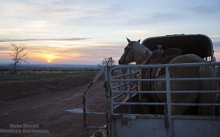 Gelding sun rise on JA Ranch