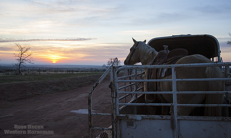 Gelding sun rise on JA Ranch