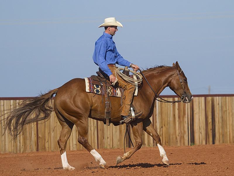 Ben Baldus practicing with horse.