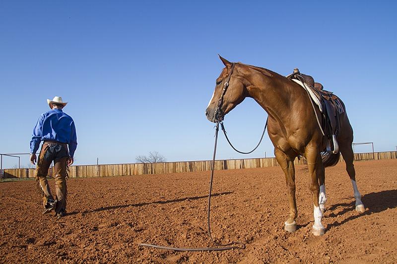 Horse ground tied