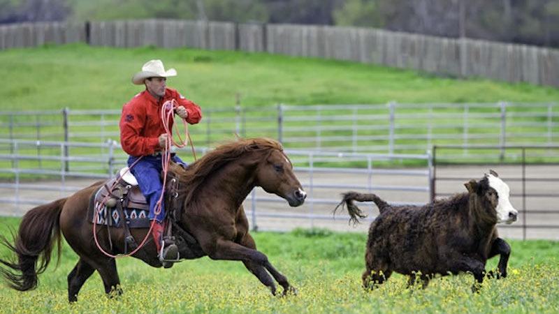 Russell Dilday Horseback