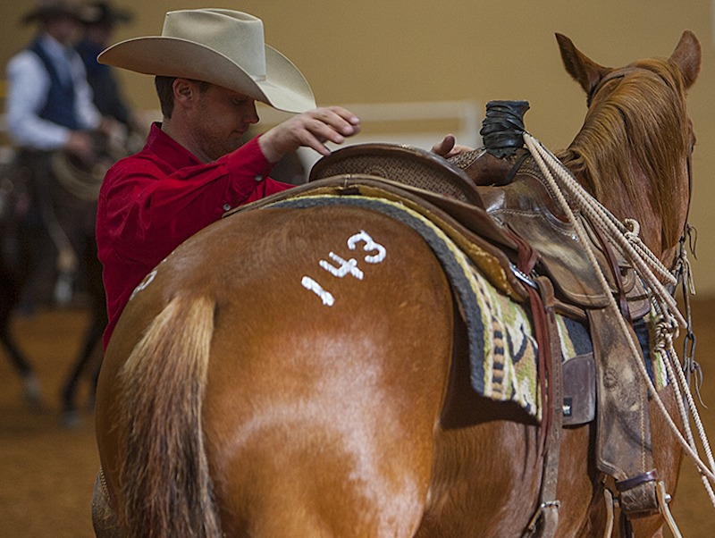 sale horse getting checked on