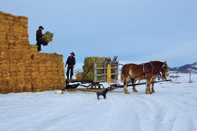 Picabo Livestock Team
