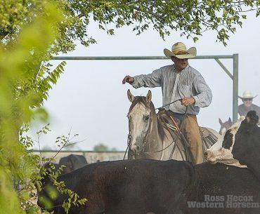 Beggs ranch gray horse