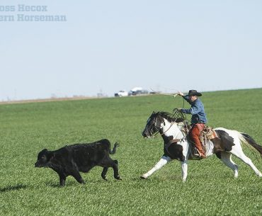 John Bergin on Paint horse Hitch Ranch