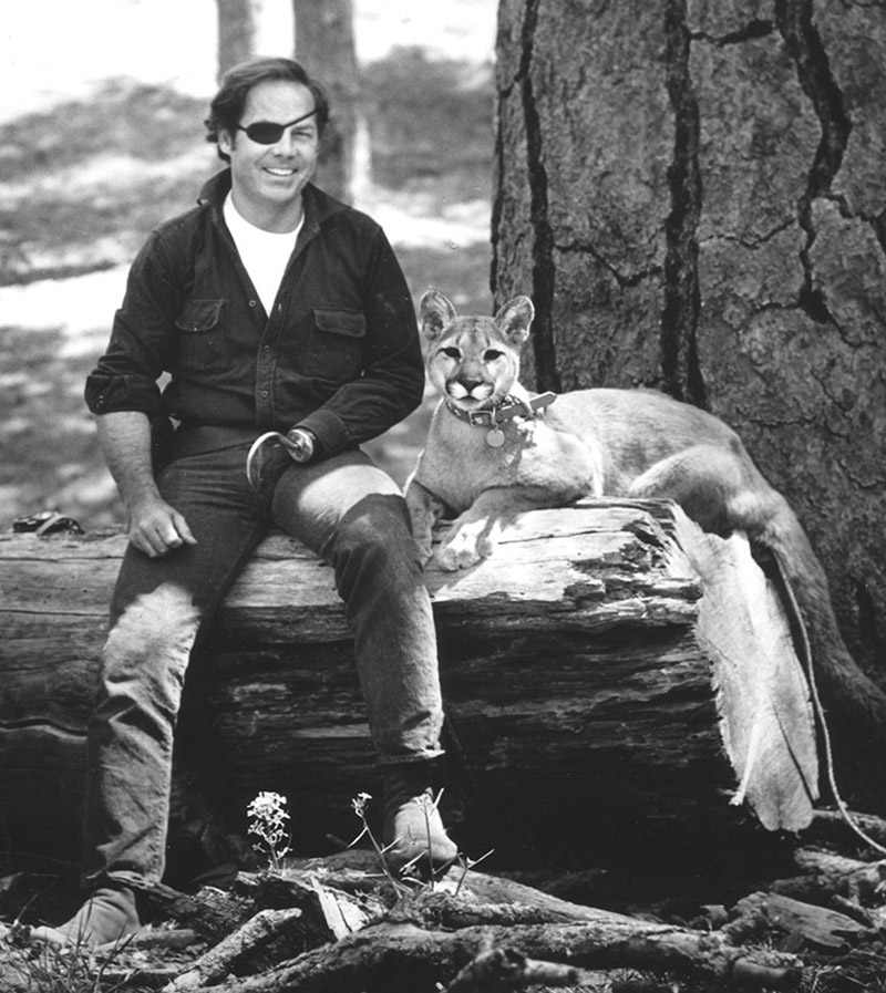 cougar wilcat as pet with silversmith